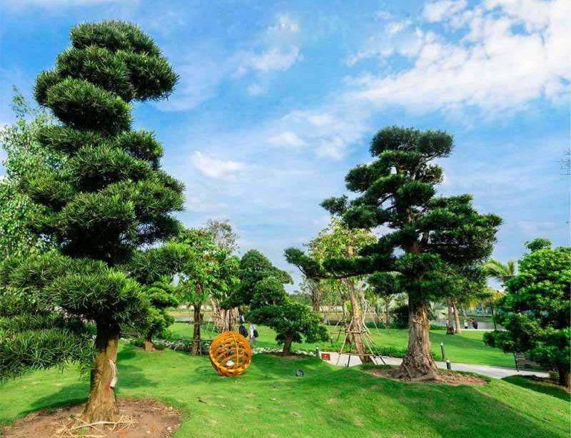 Vườn tùng La hán